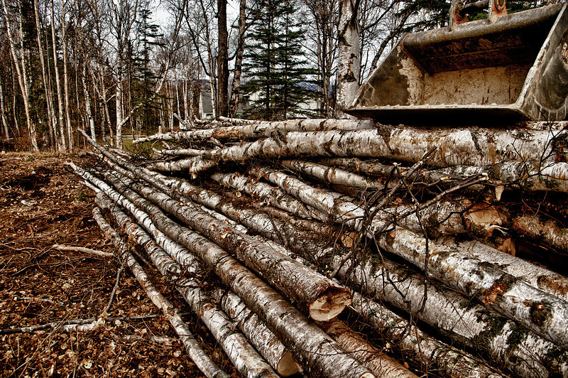 Approximately 6 cords of birch.