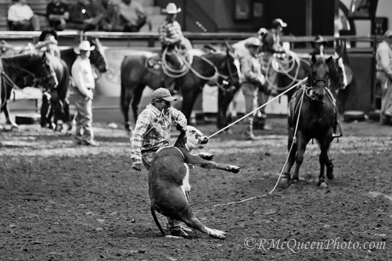 Calf Rope-5667-2