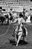 Calf Rope-5579