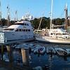 Big yacht in Camden Harbor