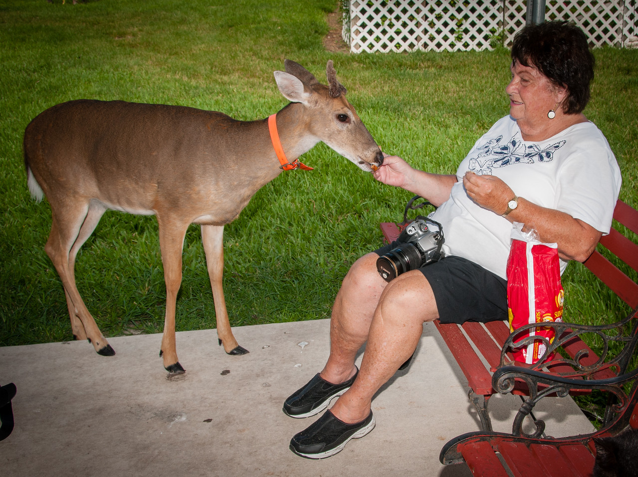 • Location -  Arnold's Butterfly Haven<br /> • Shannon is enjoying feeding the deer too.