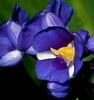 Bok Tower Gardens - Flower