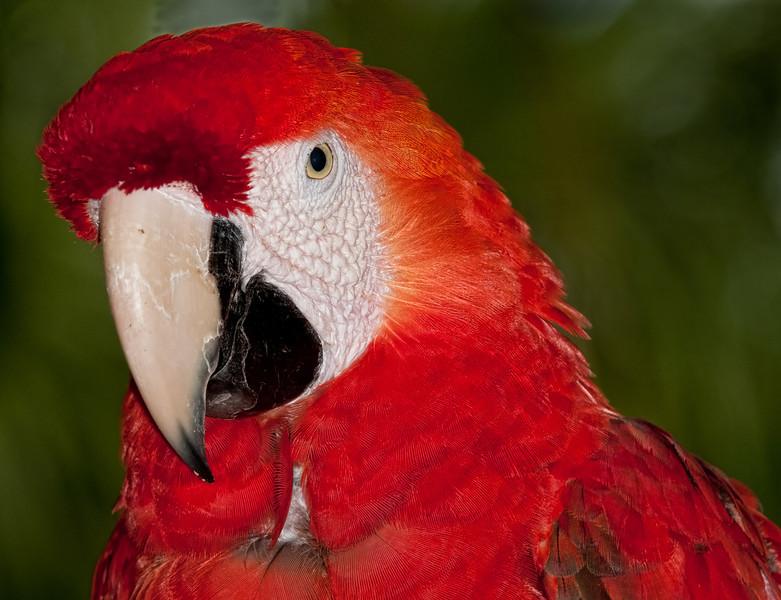 • Brevard Zoo<br /> • Parrot