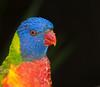 • Brevard Zoo<br /> • Lorikeet