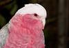 • Brevard Zoo<br /> • Cockatoo