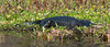 • Fountain of Youth ECO/History Pontoon Boat Tour<br /> • A 10 Foot Gator just sunning its self