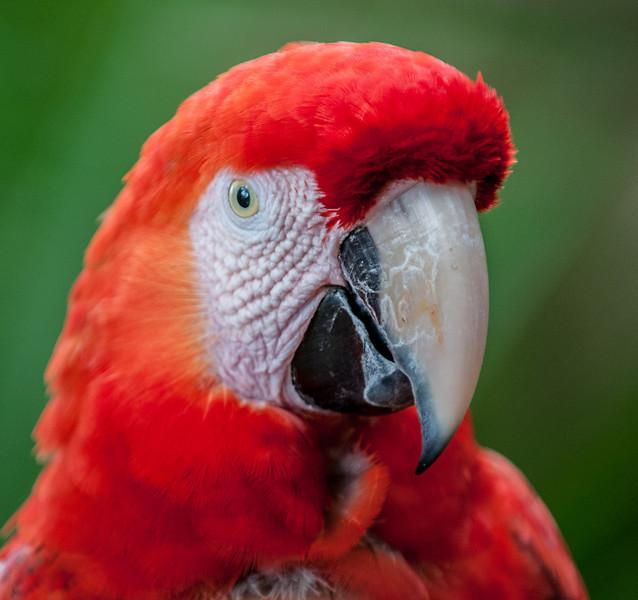 Macaw up close