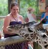 Feeding time for the Giraffe