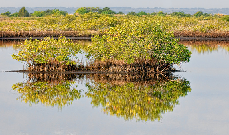 • Location - MIWR, Black Point Drive<br /> • Landscape image with Mangrove Trees with their reelections