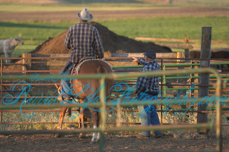 Brad & Dale Cameron sorting cattle.