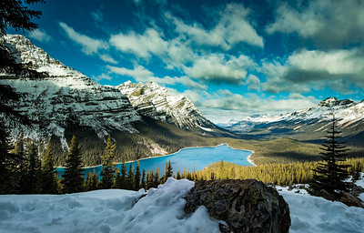115-Peyto Lake-2017 114 oct29 dogs+pey-0402-2