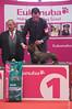 Canino 2009 Exposição Canina Internacional da Costa Azul - Moita