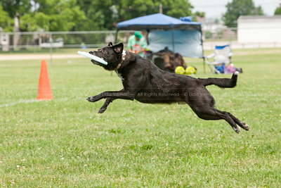 York Skyhoundz June 13, 2015