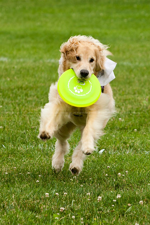 Canine Frisbee