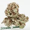 strain 2010
