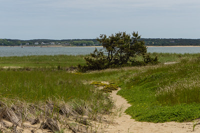 Great Island Trail