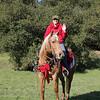 Noelle Rodalaro riding Peanut - 08