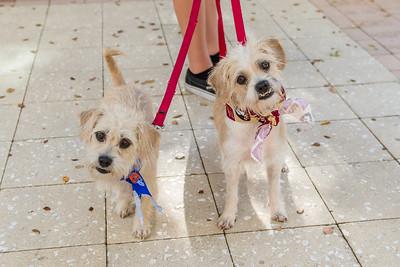 Adoptable dogs Lola & Ava