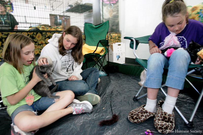 8/14/10 -- Seattle Humane Society Catapalooza event.  Girl scouts from troops Fawn, FuFu and Arrowhead make friends in the Purrfect Pals tent. photograph by: Dominique Riley
