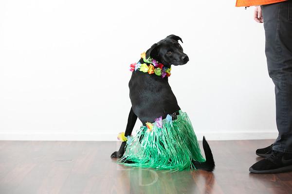 11.14.18 AVEX Pups | Holiday Card