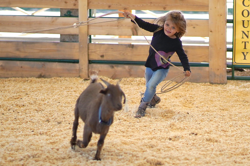Matthew Gaston | The Sheridan Press <br /> Carsyn Cates, 4, chases down a goat during the Pee Wee Roping at the Cates Goat Roping evennt Saturday, Sept. 12, 2020.