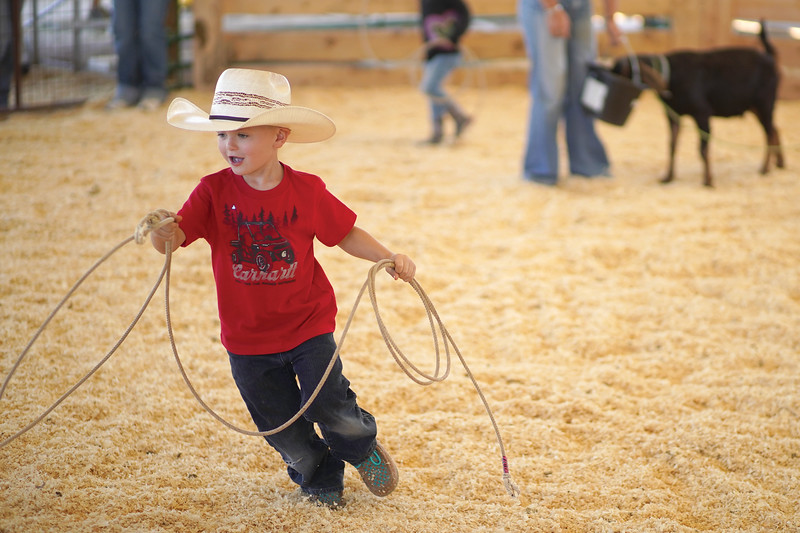 Matthew Gaston | The Sheridan Press <br /> Three-year old Daxtyn Schankey chases down a goat in the 4H ring during the Pee Wee roping practice at the Sheridan County Fairgrounds Saturday, Sept. 12, 2020.