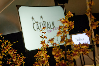 Catwalk for Kids-016