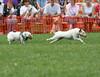 More terrier racing.