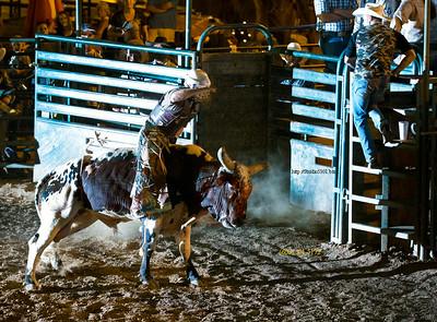 Bull rider 7631