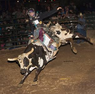 Bull Rider 8480