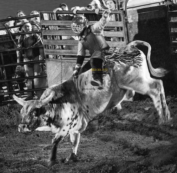 White bull  rider B&W 2879