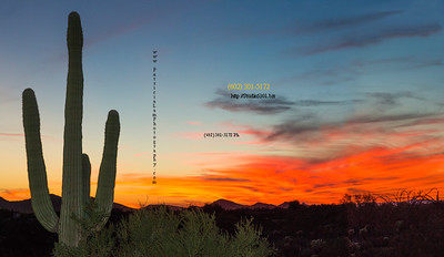 cactus and red sunset 3118