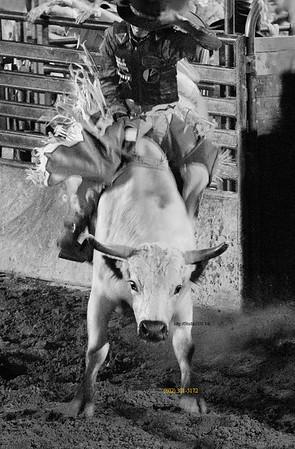 bull rider 2885 B&W 091914c
