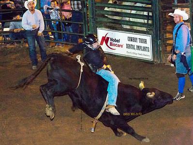 dark bull rider 2917
