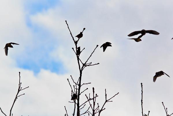 Birds 2013-4534