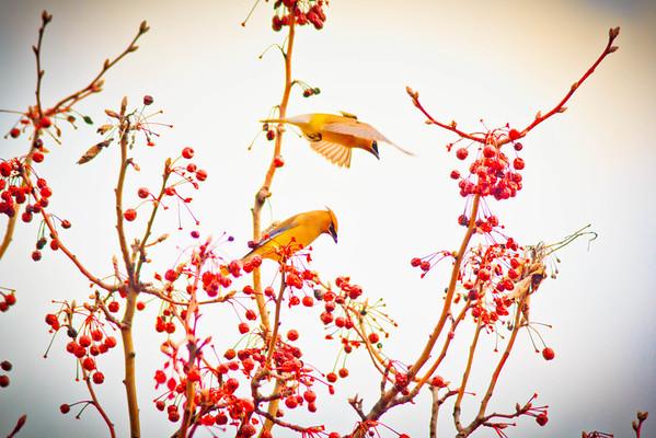 Birds 2013-4506