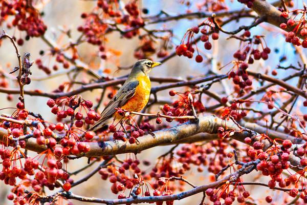 Birds 2013-4492