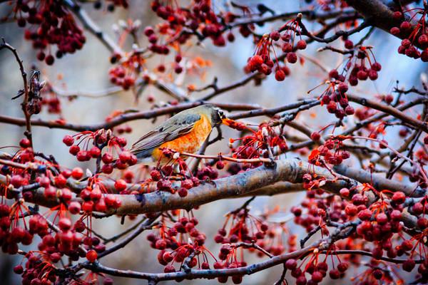 Birds 2013-4499