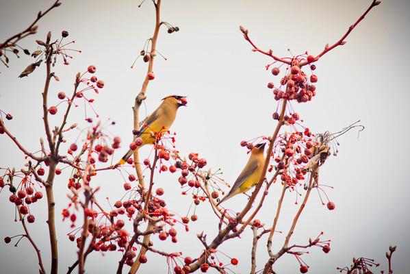 Birds 2013-4507