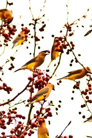 Birds 2013-4394
