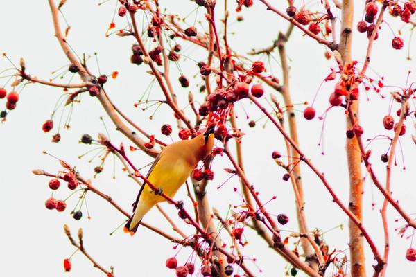 Birds 2013-4516