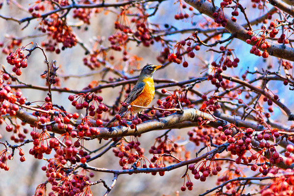Birds 2013-4485