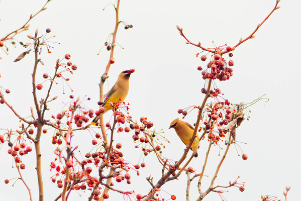 Birds 2013-4509