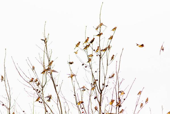 Birds 2013-4459