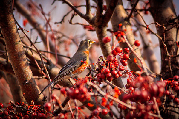 Birds 2013-4526