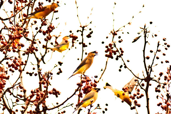 Birds 2013-4397