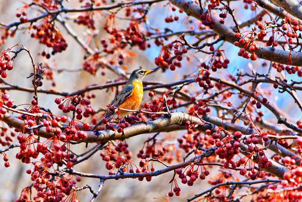 Birds 2013-4486