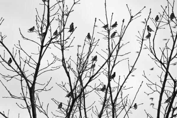 Birds 2013-4537