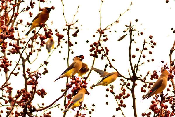 Birds 2013-4395