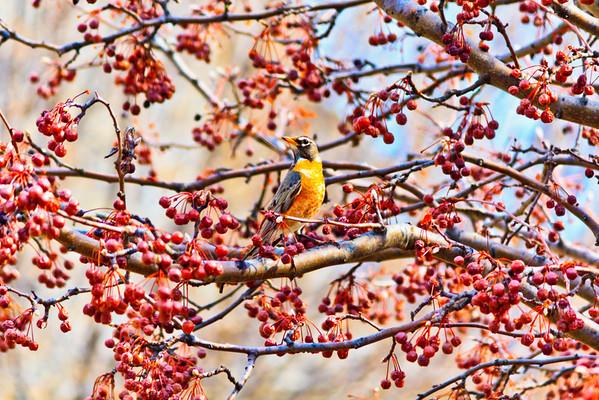 Birds 2013-4488
